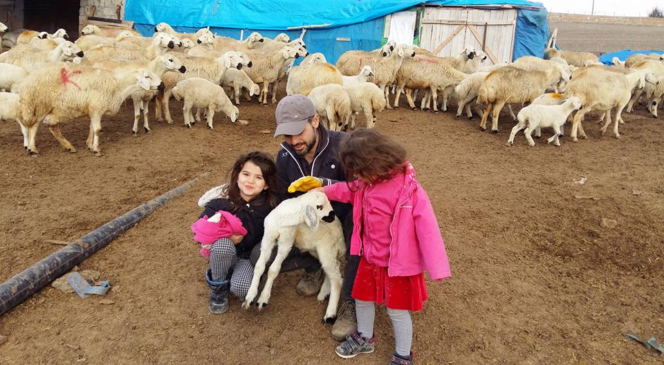 Animal husbandry last resort for Turkish teacher dismissed in post-coup purge