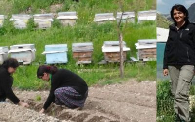 Sacked in post-coup purge, teacher of 18 years working as beekeeper for living